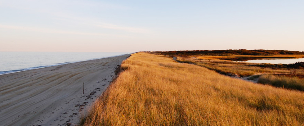 Nantucket Walkabout | 2-Hour Guided Wilderness Hikes